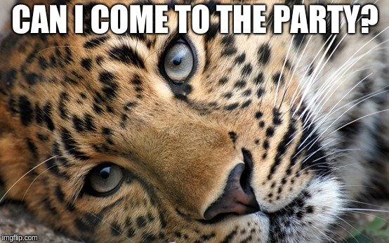 Leopard asking.jpg