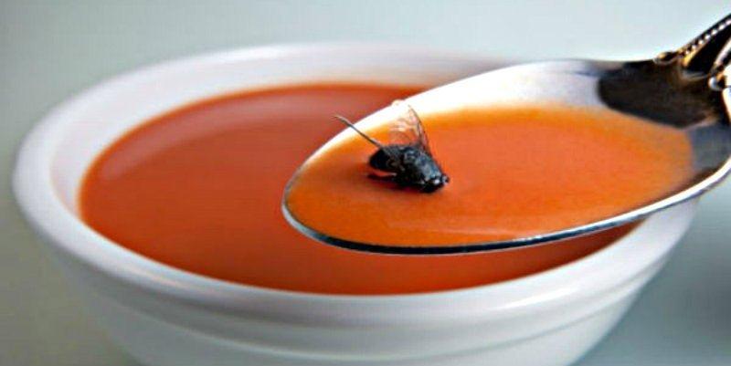 mosca-sopa-111mosca.jpg