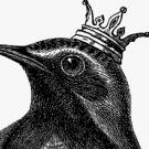 Oh Tiniest Bird