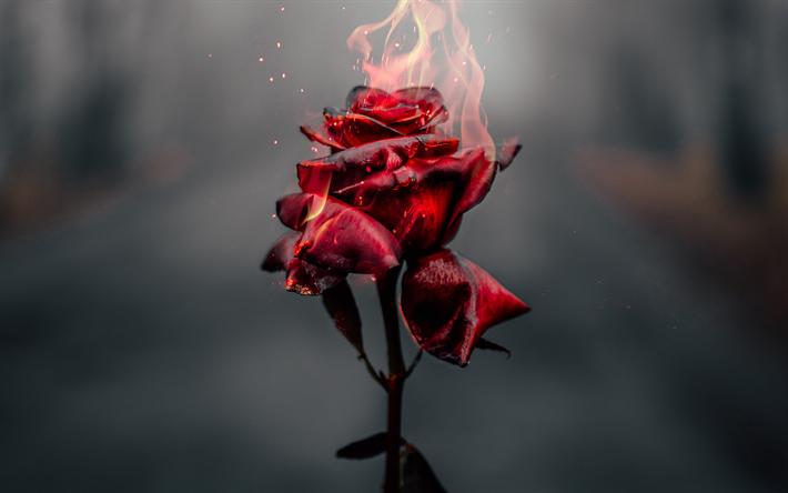 thumb2-burning-rose-4k-fire-flames-broken-love-concept-burning-flower.png