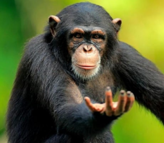 monkeyhand.png