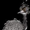 Bird Shorten