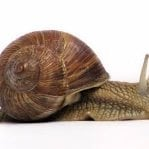 The Daily Snail
