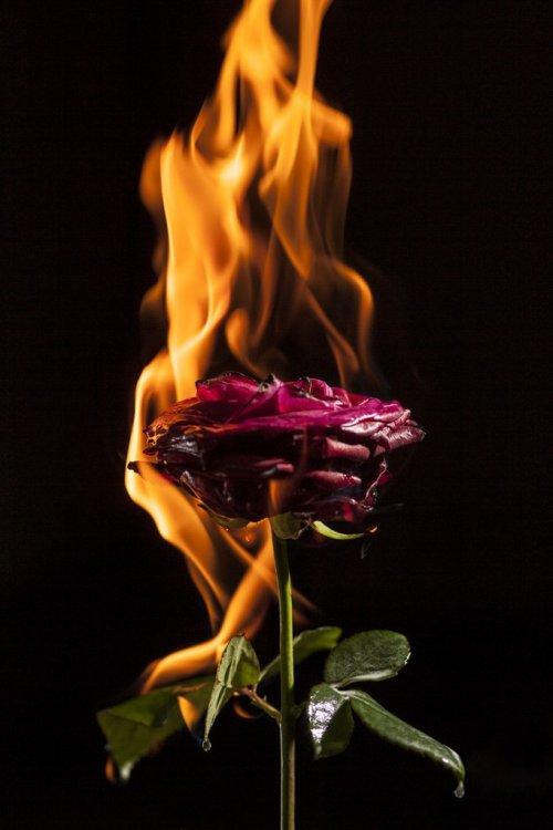 burning-682x1024.jpg
