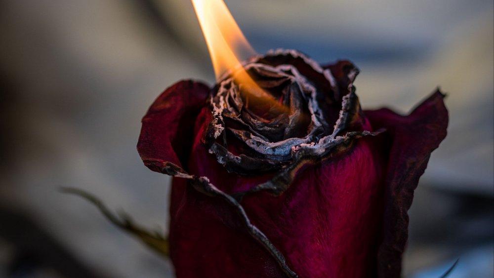 rose_fire_bud_119438_1920x1080.jpg